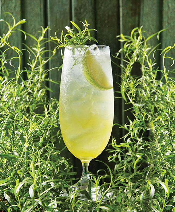 Cocktails aux fines herbes