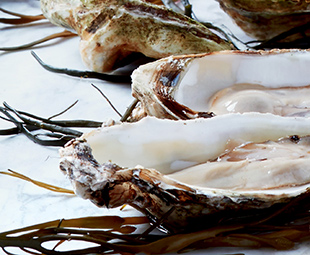 Galway Oysters with Mignonette Sauce