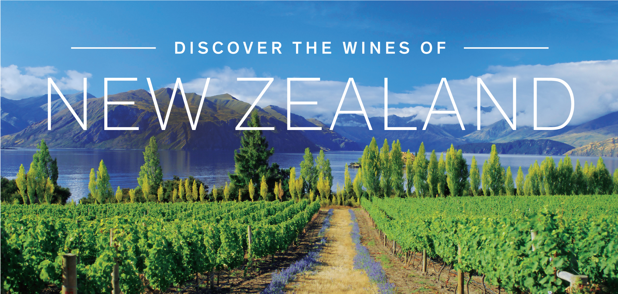 Discover the Wines of South Africa