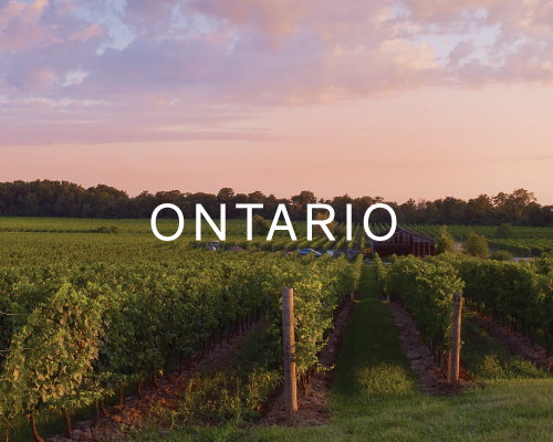 Shop wines from Destination Collection Ontario