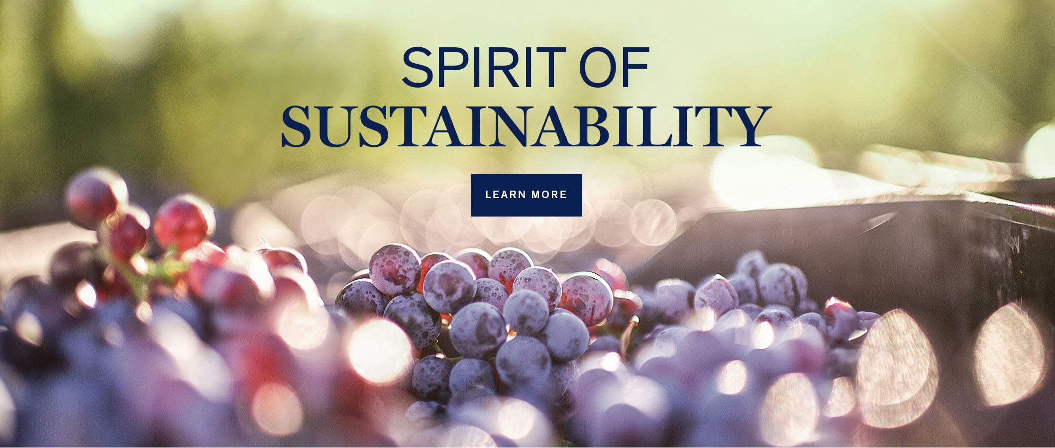 Spirit of Sustainabilty.  LEARN MORE
