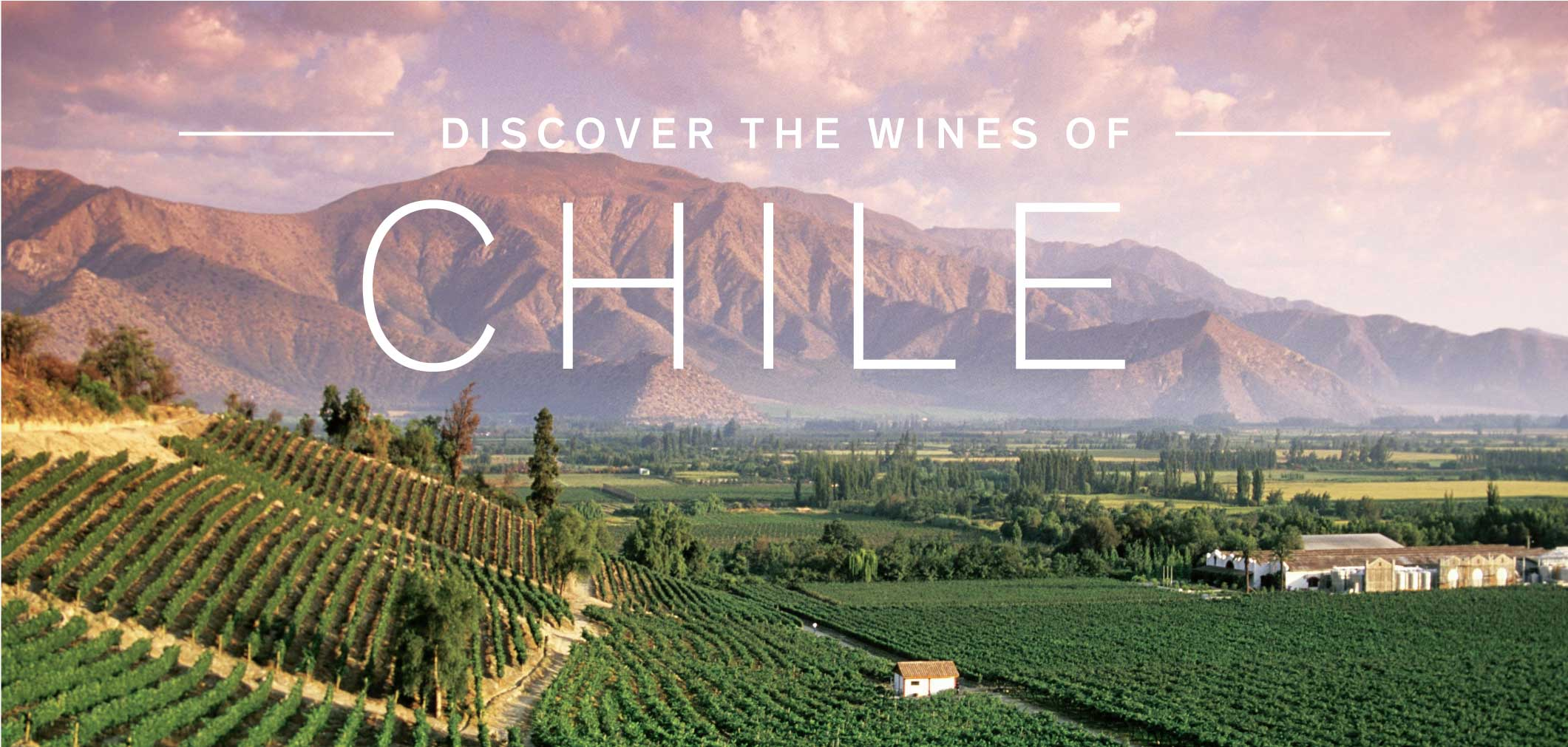 Discover the Wines of Chile