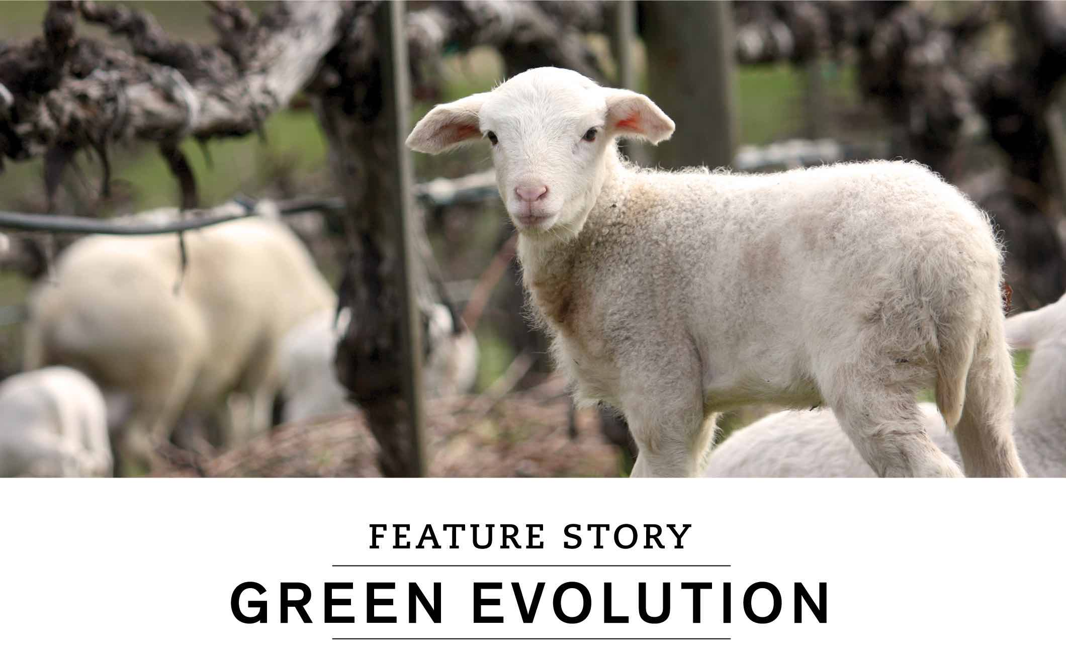 FEATURE STORY: GREEN EVOLUTION