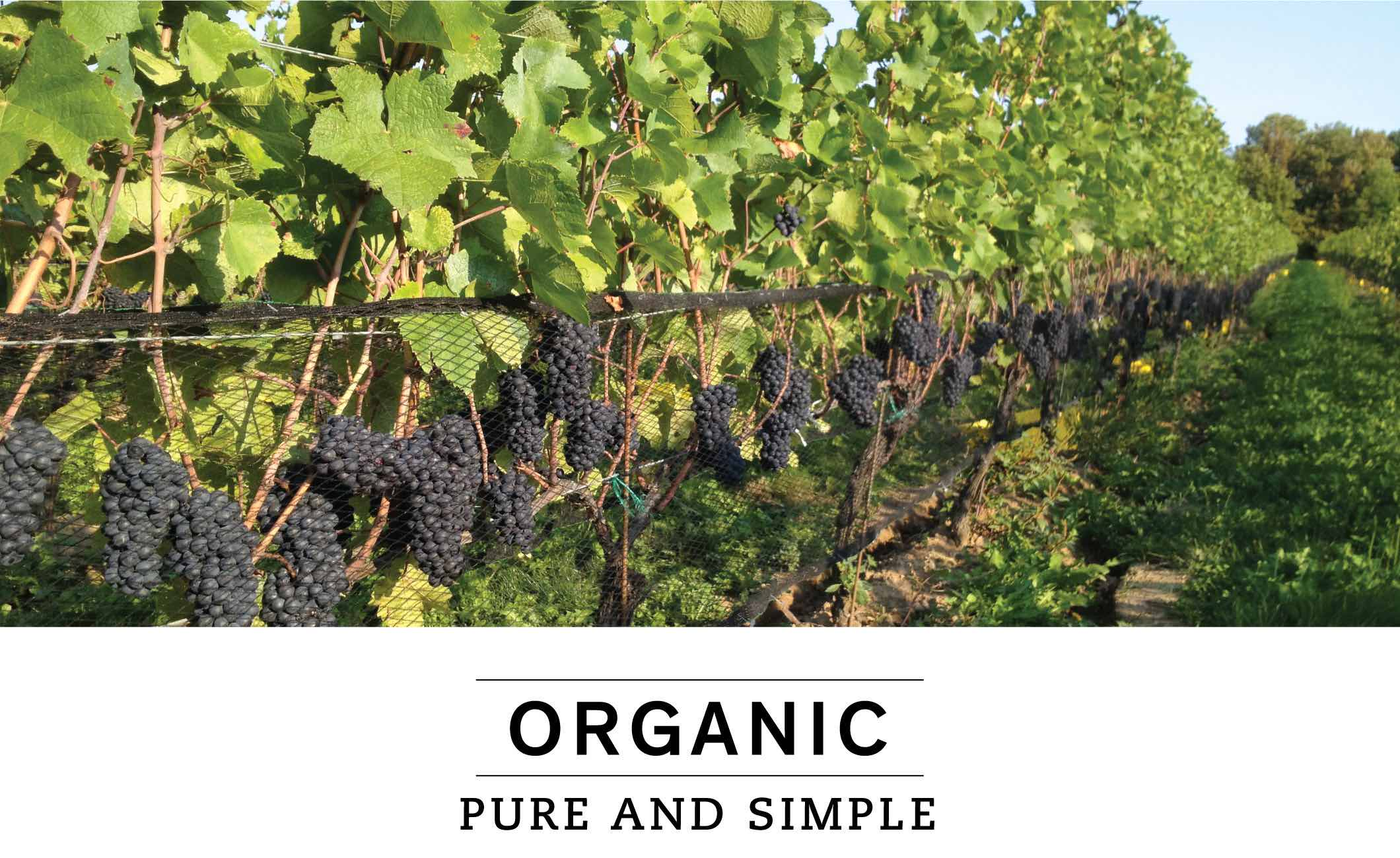 ORGANIC: PURE AND SIMPLE
