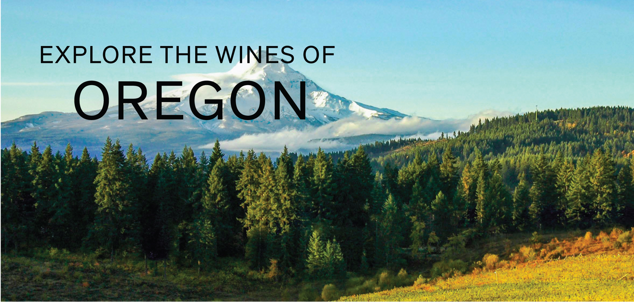 Explore the Wines of Oregon